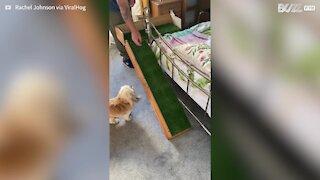 Pai constroi rampa para cadela com problemas físicos