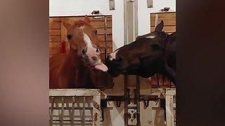 Silly Farm Animals