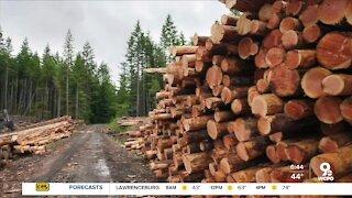 Insane lumber prices hurting homeowners