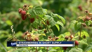 Strawberries are in short supply