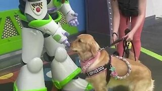 Service dogs in training meet Buzz Lightyear at Disney World.