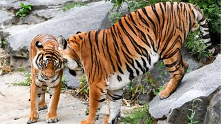 'Feds Shut Down The 'Tiger King' Zoo