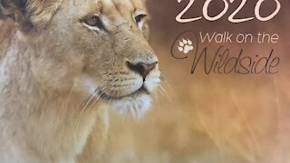 SOUTH AFRICA - Durban - 2020 Wildlife Calendar Launch (Video) (iPE)