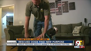 Rescued dogs find new purpose
