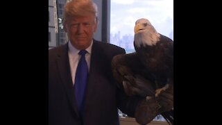 President Donald J. Trump - Silent Running