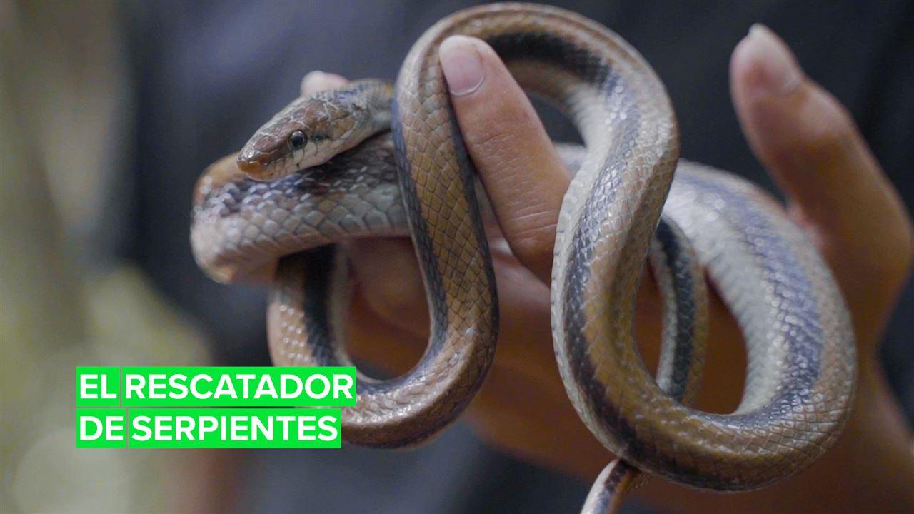 El rescatador de serpientes en Nepal