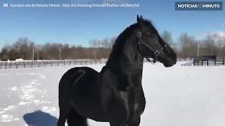 Cavalo não se cansa de brincar na neve de Nova Iorque