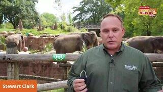 Busch Gardens Reopens Morning Blend