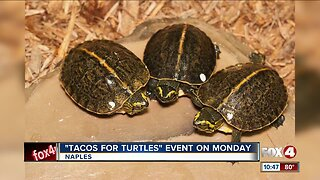 Tacos for Turtles event on Monday