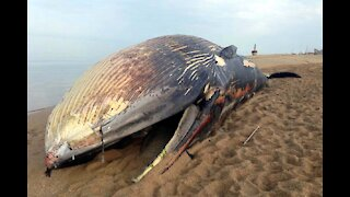 Dead whale mystery