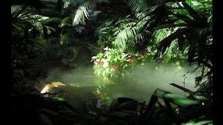 Relaxing Sleep Music: Soft Piano Music, Sleeping Music, Meditation Music, Fall Asleep ★89