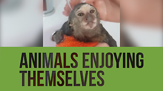Check out this compilation of animals totally enjoying themselves!