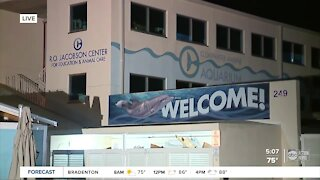 Clearwater Marine Aquarium unveils $80 million expansion
