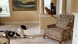 Relaxed Cat and Great Dane Share A Zen Moment With A Foo Dog
