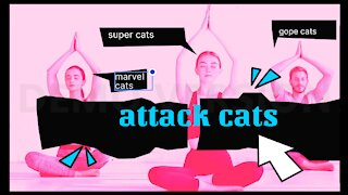 cats Street Fighter