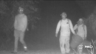 Woman's security camera catches men illegally picking palmetto berries on her property