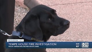 Valley arson dog helping with Tempe house fire investigation