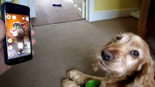 Dog has epic argument with 'Talking Tom' app