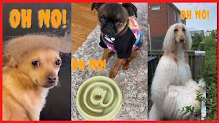Funny Pets Reaction - Try Not To Laugh Animals | FUNDOGG