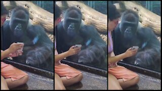 WOMAN BECOMES BEST FRIENDS WITH GORILLA