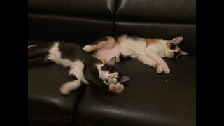 This is cat love, my adorable cats