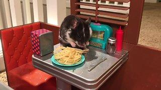 Hamster enjoy tasty spaghetti at the diner