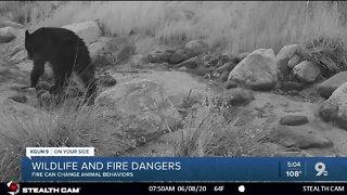 Wildfire and wild animals 5pm
