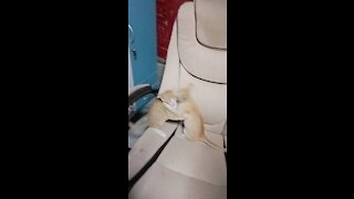 Cute cats fighting