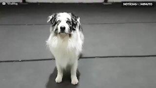 Este cão é um verdadeiro equilibrista!