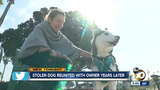 Stolen dog reunited with owner years later