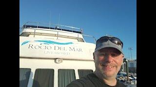 Sea of Cortez: Fun Sea Lion Dive