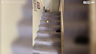 Hund leger 'hent bolden' med sig selv