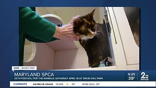 Good Morning from the Maryland SPCA
