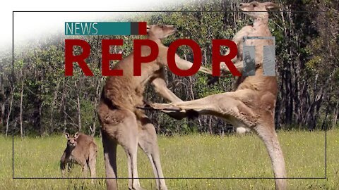Catholic — News Report — Aussies Resist Tyranny