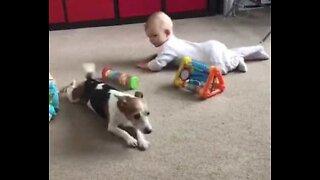 Søt hund prøver å lære en baby å krype