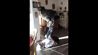This dog and his owner pull off some mind-blowing tricks!