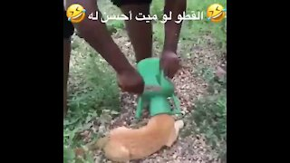 Save a dog from a plastic pot