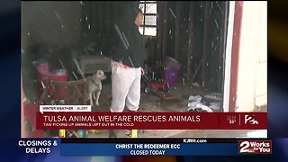 Tulsa Animal Welfare Rescuing Animals From the Cold