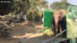 Elefant reddet etter 40 år i fangenskap
