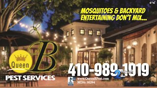 Queen B Pest Services