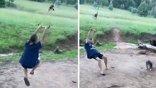 Corgi wanders into swinging path for adorable epic fail