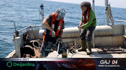 Merinov : sauver les baleines en nettoyant le fond des océans