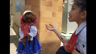 First day Puppy goes to School