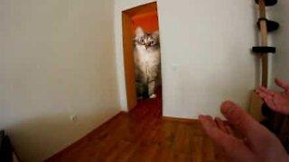 Il fait apparaître son chat tel un géant