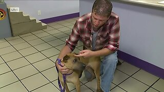 Fostering pets at Gulf Coast Humane Society amid COVID-19 outbreak