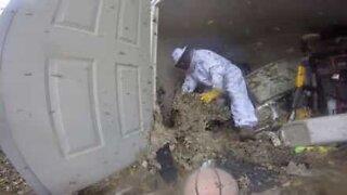 Exterminador profissional remove ninho gigante de abelhas