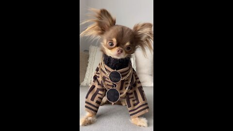 Funny puppy video winter fashion look nyc