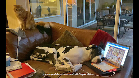 Cat in disbelief as dog uses laptop for a pillow