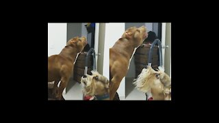 insane these dogs angry with the insect