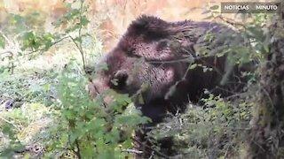 Um encontro com um urso nada assustador!